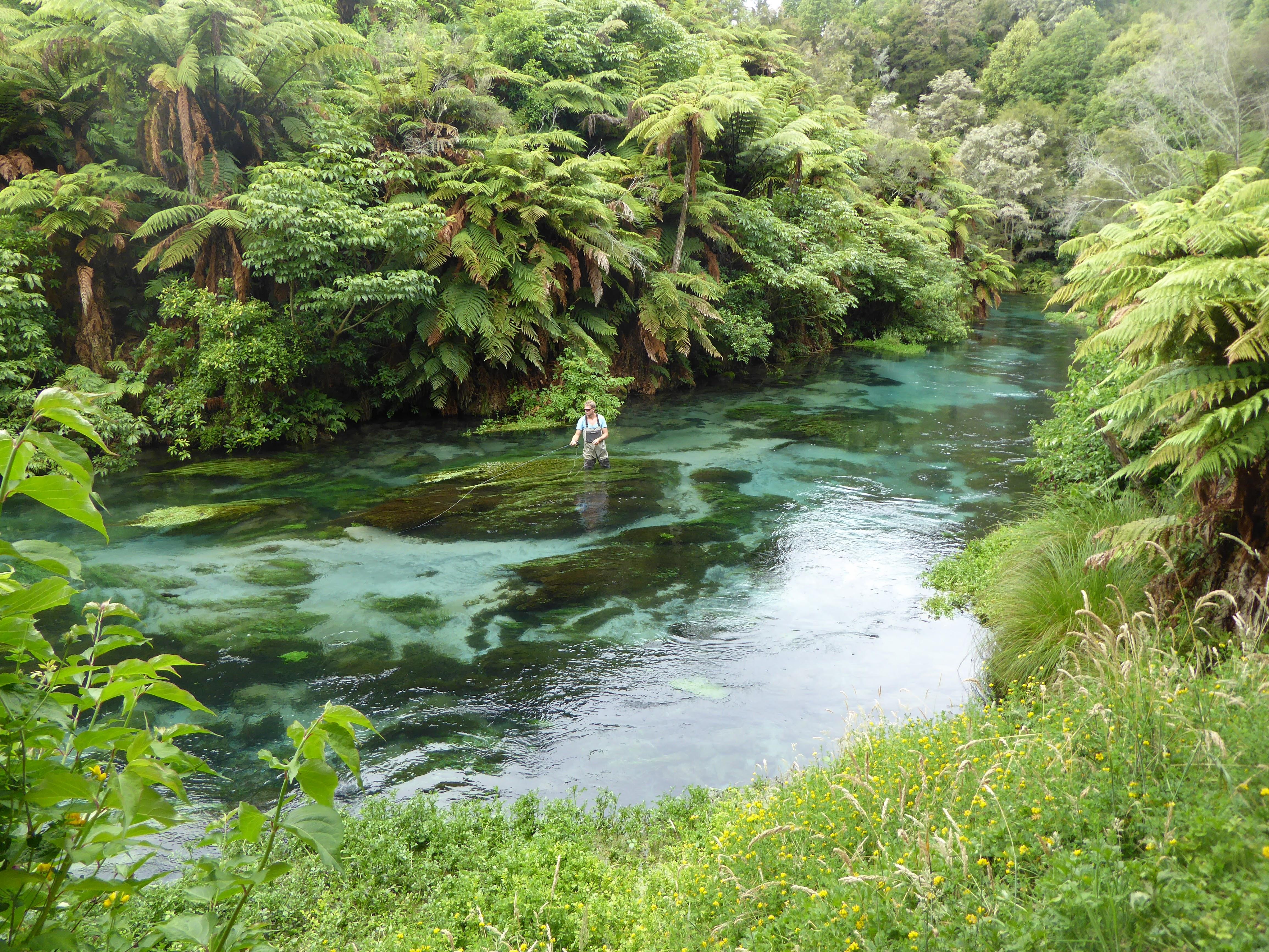Flugfiske Nyazeeland
