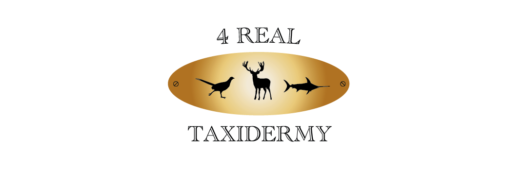 4 real taxadermi logga