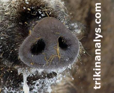 Trikinanalys.com logga